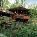 Beach hotels: Discover the tree house in Punta Uva